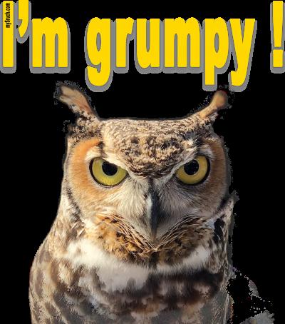 I'm grumpy! (Eule)