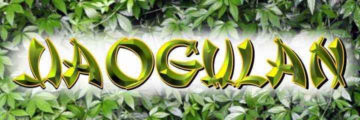 """Jiaogulan - Die Pflanze """"Jiaogulan"""", in wörtlicher Übersetzung """"Unsterblichkeitskraut"""" ist die große Hoffnung vieler Krebsbetroffener. Siewurde 2005 vom Künstler Jens Rusch nach Deutschland gebracht und vegetativ vermehrt. Heute gilt er für viele gesundheitsbewusste Menschen deshalb als Pionier. Die Facebook-Gruppe """"Jiaogulankultur"""" hat fast 2500 Miglieder."""